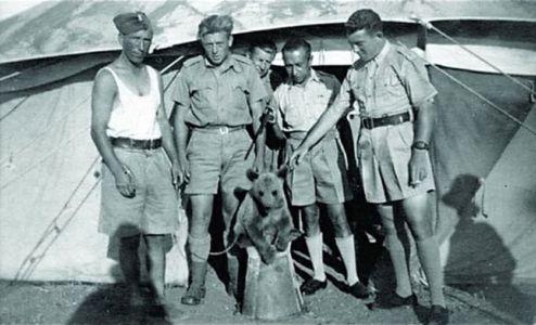 pui urs in armata al doilea razboi mondial blog squad store
