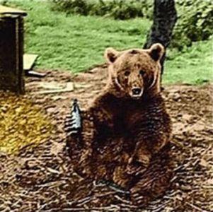 ursul vojtek cu bere blog squad store