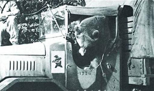 ursul woytek in masina blog squad store