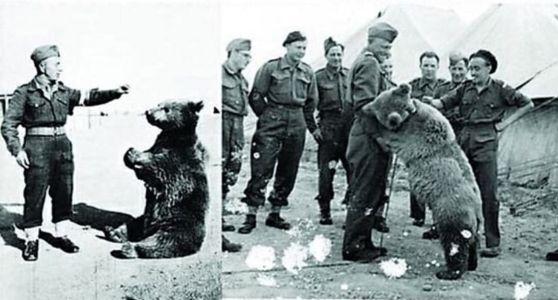 ursul wojtek in compania soldatilor blog Squad Store